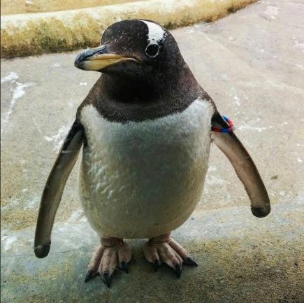learn365project_penguin.jpg